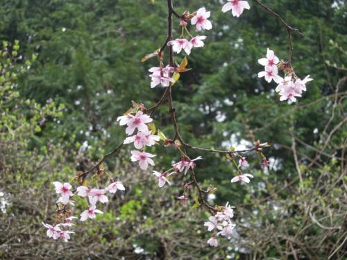 f:id:hiyohiyodori:20150426110514j:image