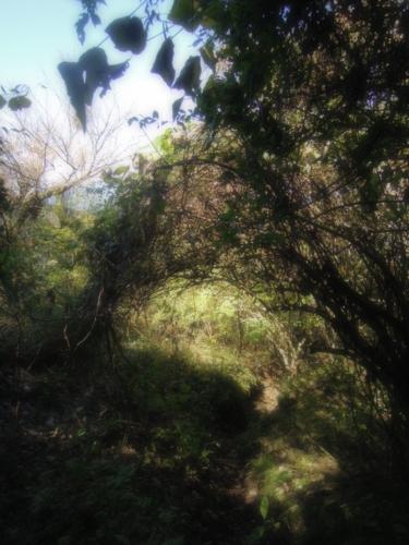f:id:hiyohiyodori:20151012105444j:image