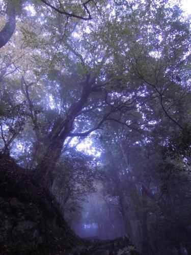 f:id:hiyohiyodori:20151115153619j:image