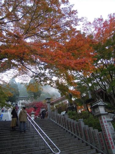 f:id:hiyohiyodori:20151115155313j:image