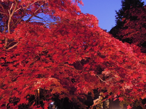 f:id:hiyohiyodori:20151115172232j:image