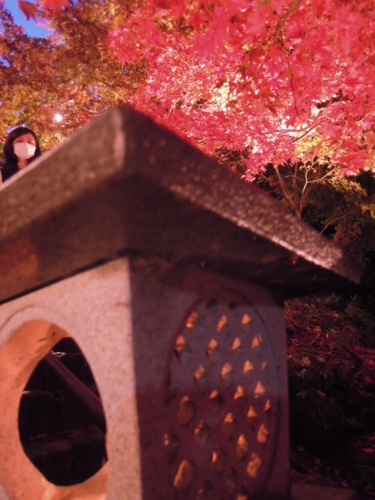 f:id:hiyohiyodori:20151115172300j:image
