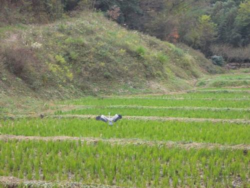 f:id:hiyohiyodori:20151206133523j:image