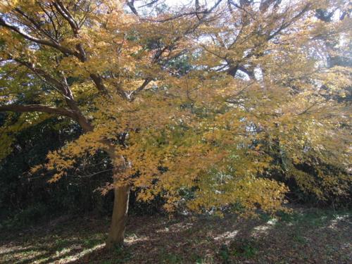 f:id:hiyohiyodori:20151212131414j:image