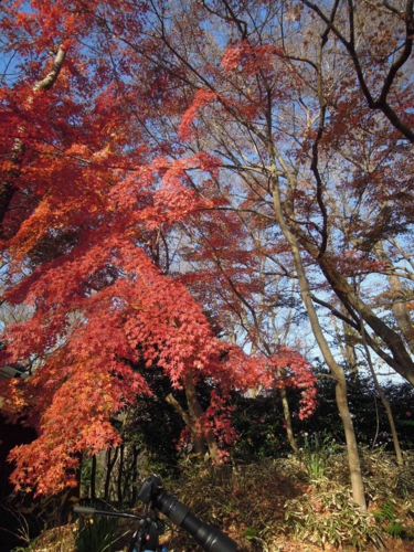 f:id:hiyohiyodori:20151220104956j:image