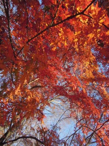 f:id:hiyohiyodori:20151220105019j:image