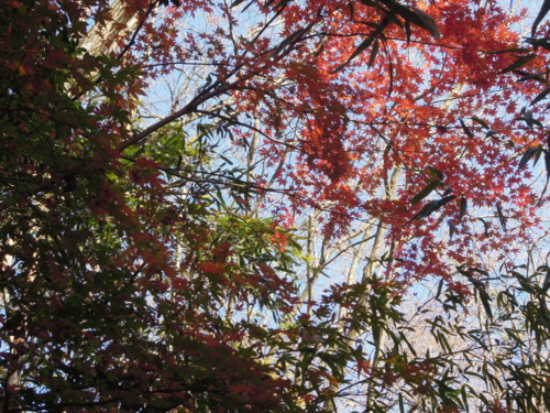 f:id:hiyohiyodori:20151220140639j:image
