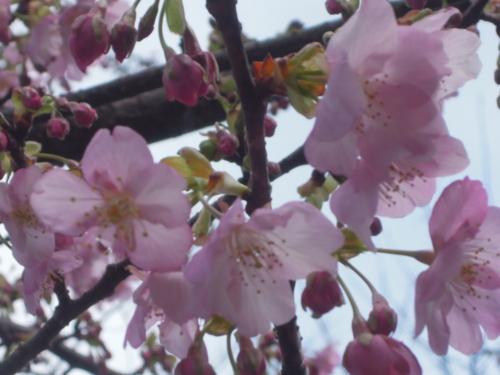 f:id:hiyohiyodori:20160214153816j:image