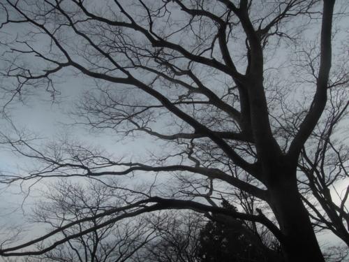 f:id:hiyohiyodori:20160305141128j:image