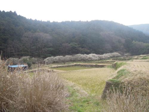 f:id:hiyohiyodori:20160305164057j:image