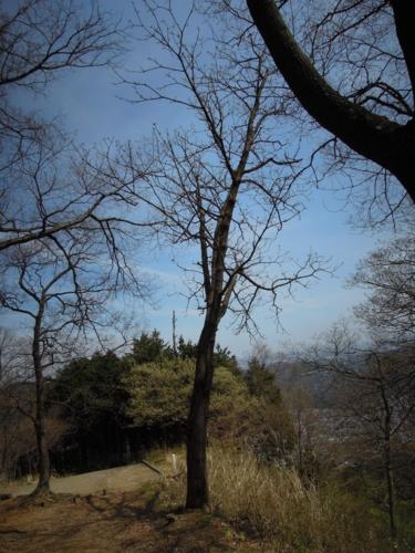 f:id:hiyohiyodori:20160409113351j:image