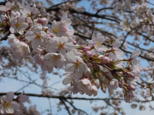 f:id:hiyohiyodori:20160409121553j:image