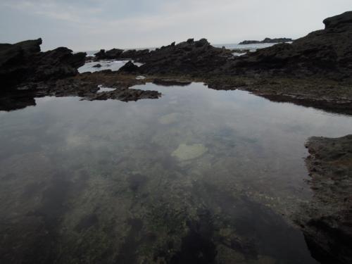 f:id:hiyohiyodori:20160919125602j:image