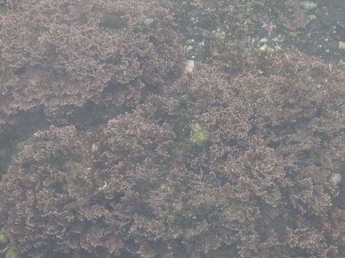 f:id:hiyohiyodori:20160919125819j:image