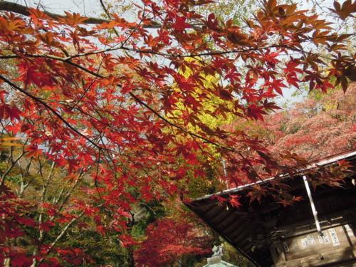 f:id:hiyohiyodori:20161126093605j:image