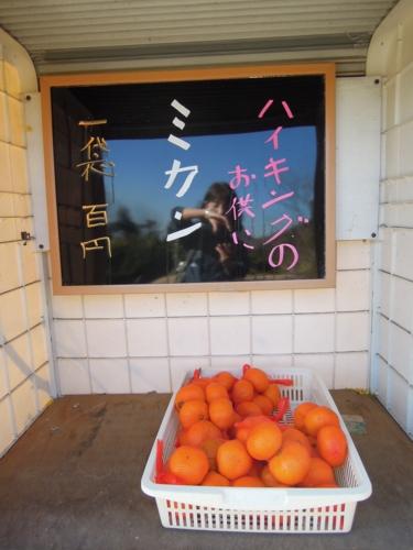 f:id:hiyohiyodori:20170128100917j:image