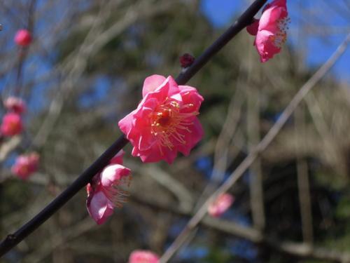 f:id:hiyohiyodori:20170128105253j:image