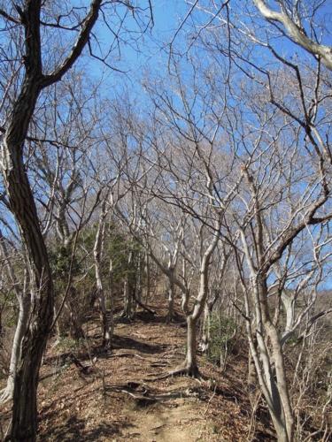 f:id:hiyohiyodori:20170128111315j:image