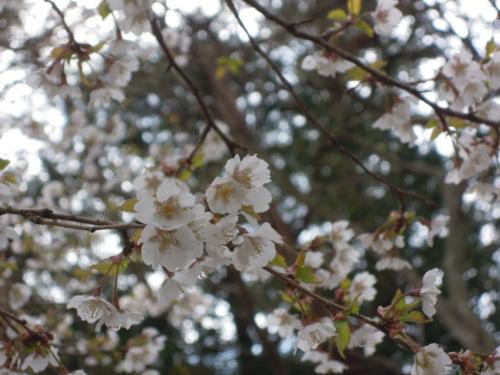 f:id:hiyohiyodori:20170423133824j:image