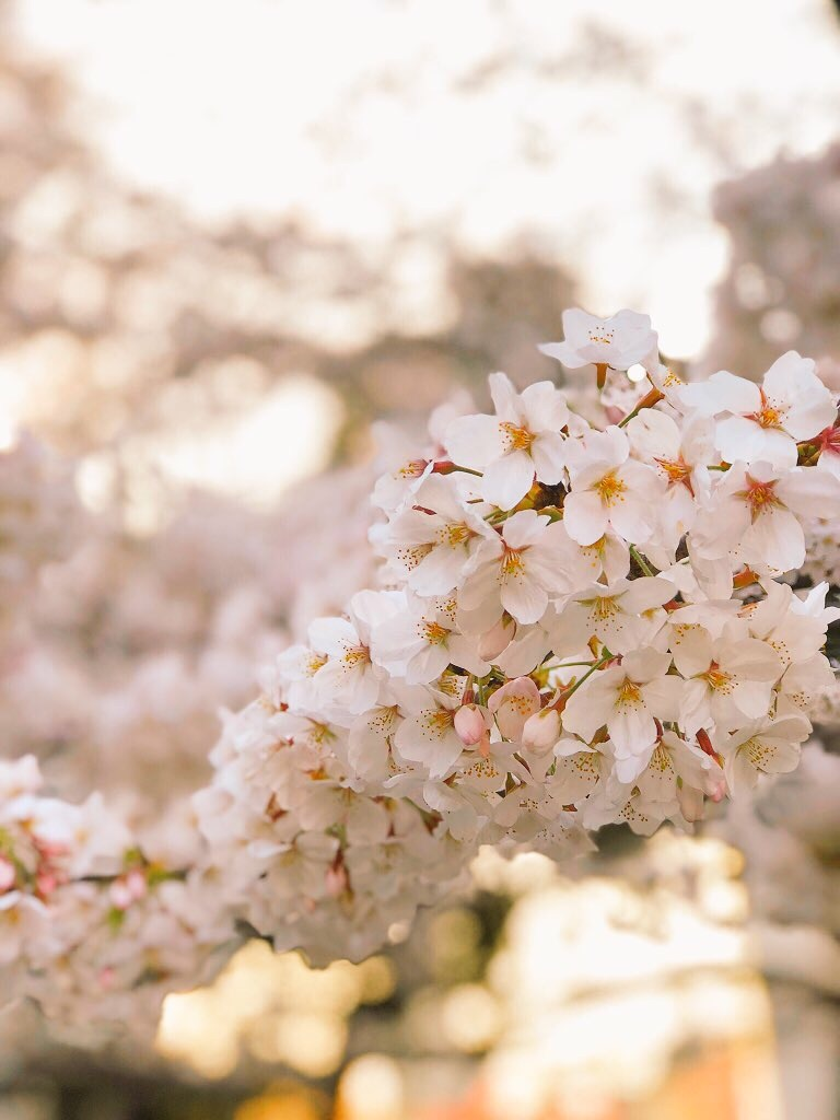 f:id:hiyuka_tokyo:20180325181003j:image