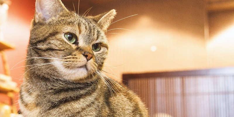 『猫の恩返し』の主人公ハルちゃんが月野うさぎに似ている件