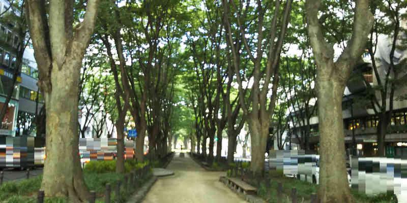 『定禅寺通り』のケヤキ並木