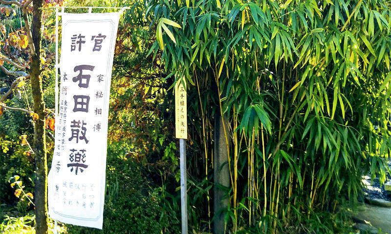 土方歳三が手植えした矢竹の写真