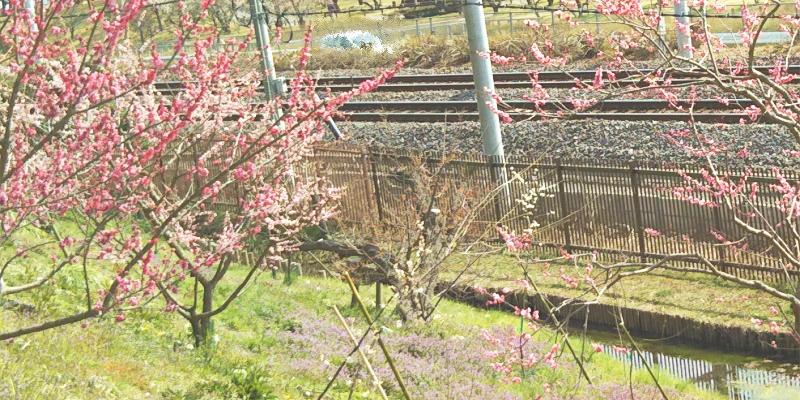 3月のメンタルクリニックは混むのでやはり春は体調を崩しやすい説