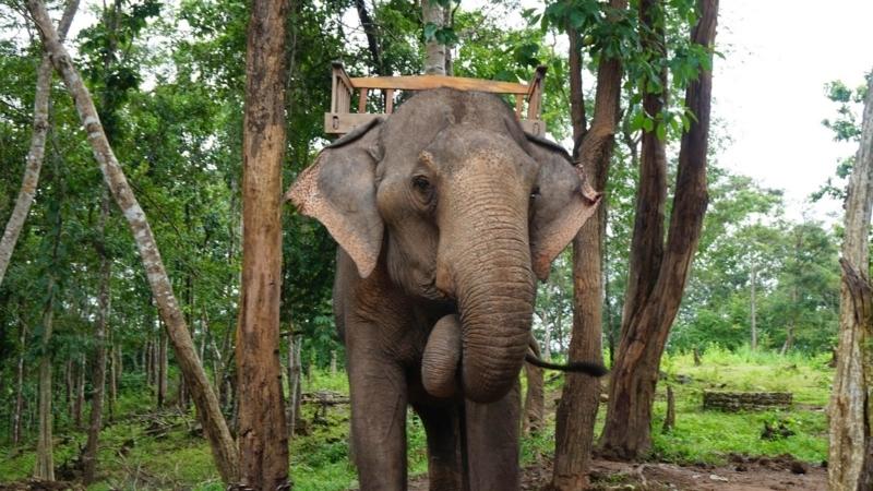 salavan_elephant2