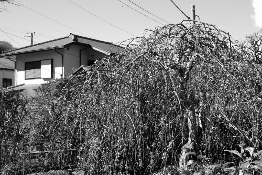 f:id:hmatsumoto1958:20170211215930j:plain