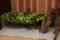 ケヅメリクガメ@横浜亜熱帯茶館