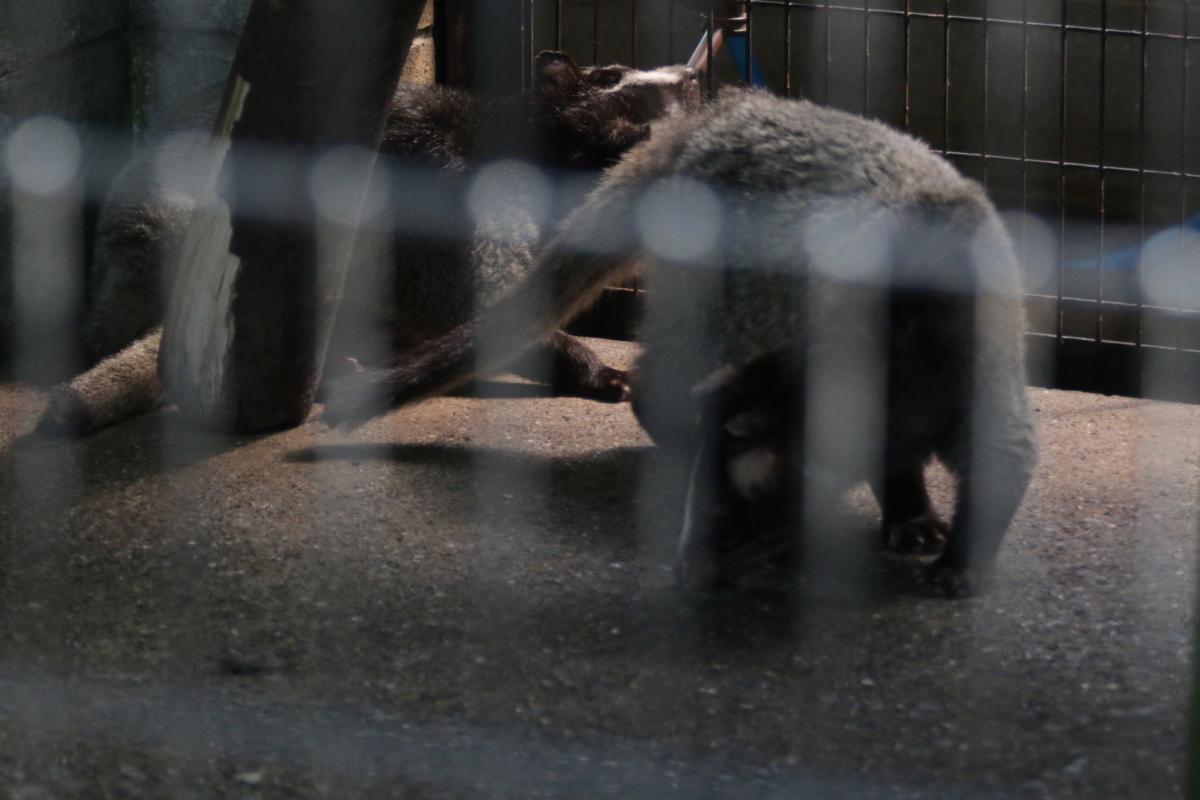 [動物園][夢見ヶ崎動物公園]