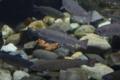 [なかがわ水遊園][水族館][お出かけ]