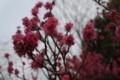 [花][郷土の森博物館]