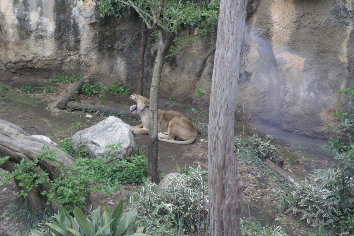 [上野動物園][動物園]