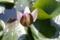 [小岩菖蒲園][花]