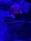 [動物園][水族館][アメリカ]