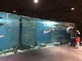 [アメリカ][水族館][動物園]