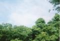 [PEN-EE3]散策 / 鎮守の森