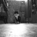 [RICOH GX200]2011/11/14