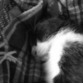 [RICOH GX200]2011/11/23 RIP