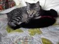[RICOH GX200]猫蹴用黒猫枕