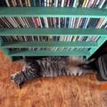 [RICOH GX200]腹猫と音盤