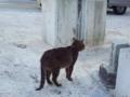 [RICOH GX200]猫 牧志界隈