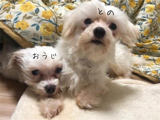 f:id:hogoken_reina:20190130182852j:image