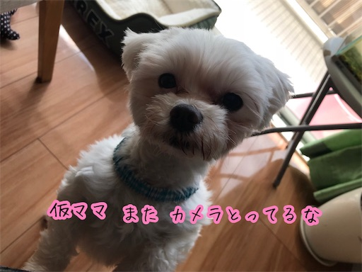 f:id:hogoken_reina:20190315195623j:image