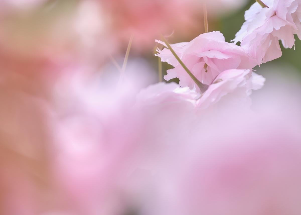f:id:hokkaidostockphoto:20210522052629j:plain