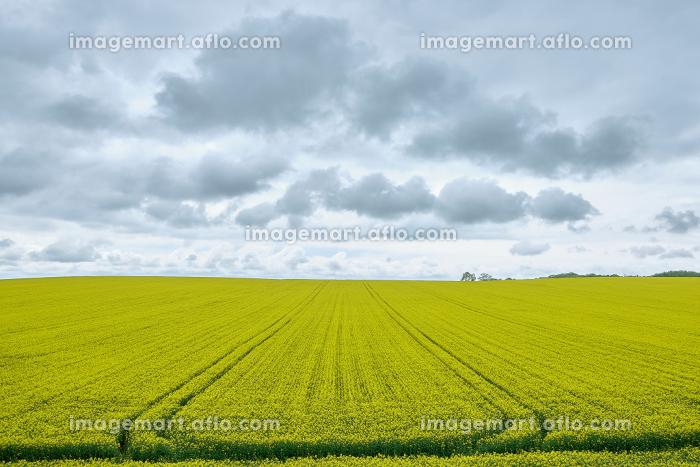 f:id:hokkaidostockphoto:20210525205641j:plain