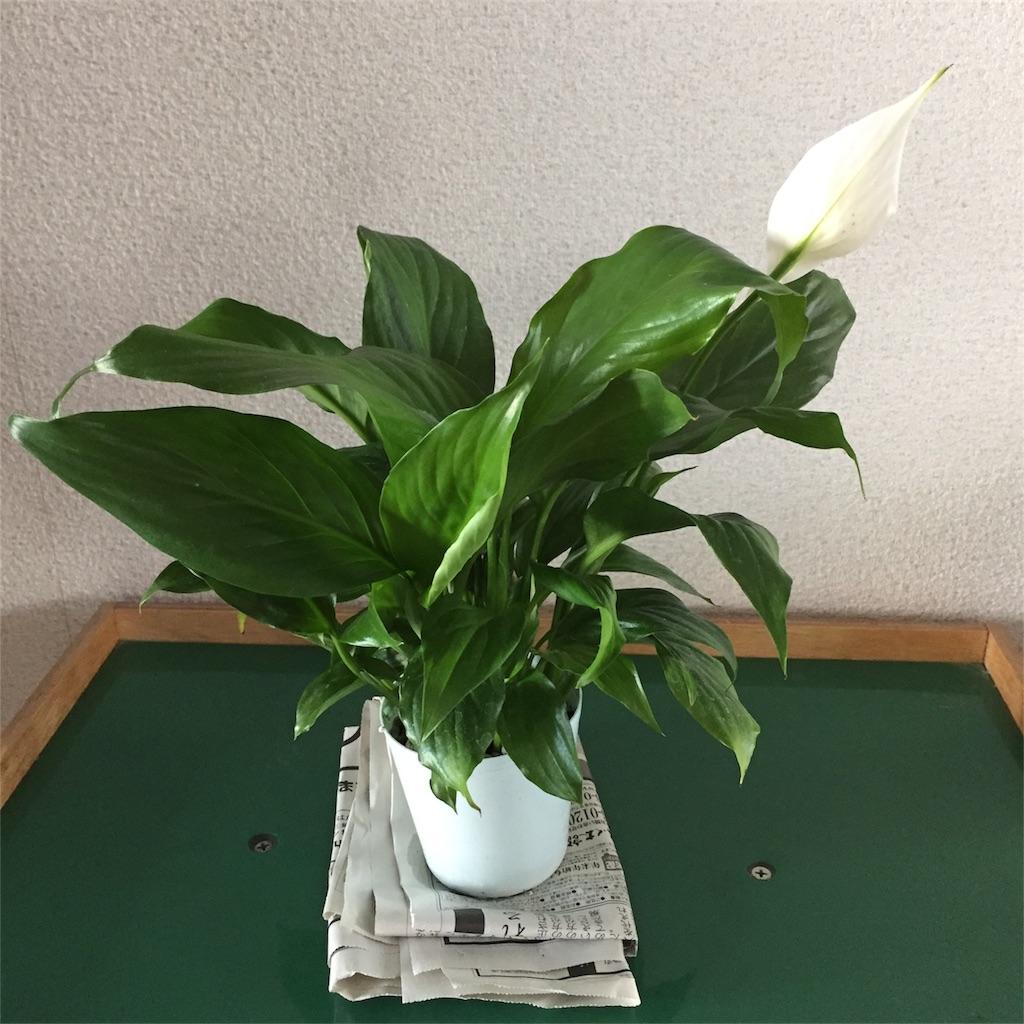 f:id:hokkori-tonkatsu:20180715182316j:image