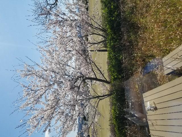 f:id:hokuriku_dodo:20190414181732j:image